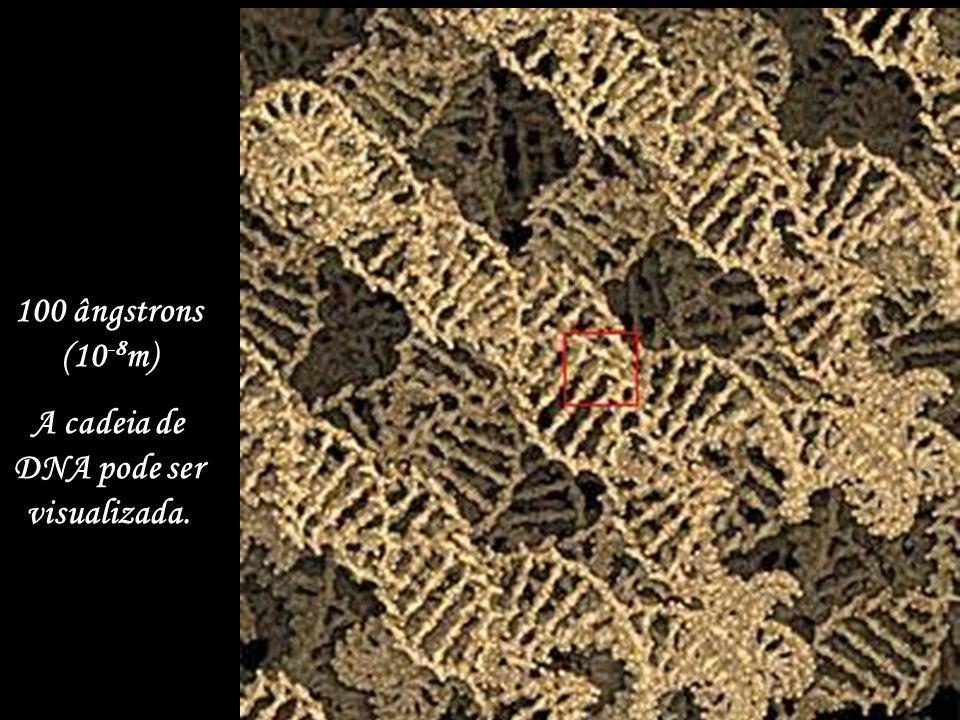 1.000 ângstrons (10 -7 m) Os cromossomas aparecem.