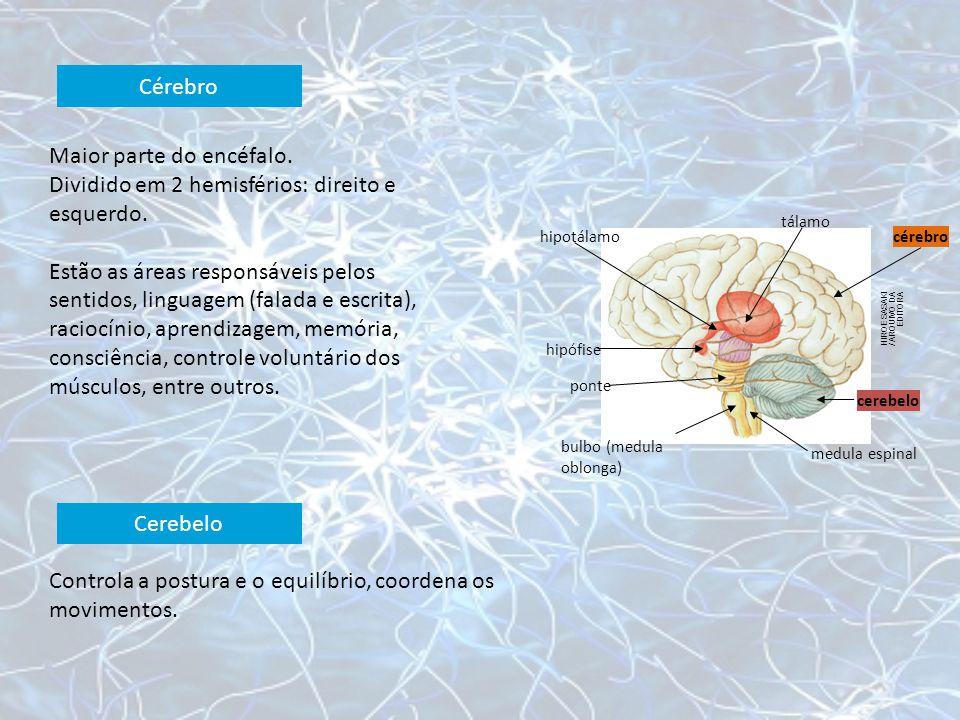 Cérebro HIROE SASAKI / ARQUIVO DA EDITORA hipotálamo tálamo cérebro cerebelo medula espinal bulbo (medula oblonga) ponte hipófise Maior parte do encéf