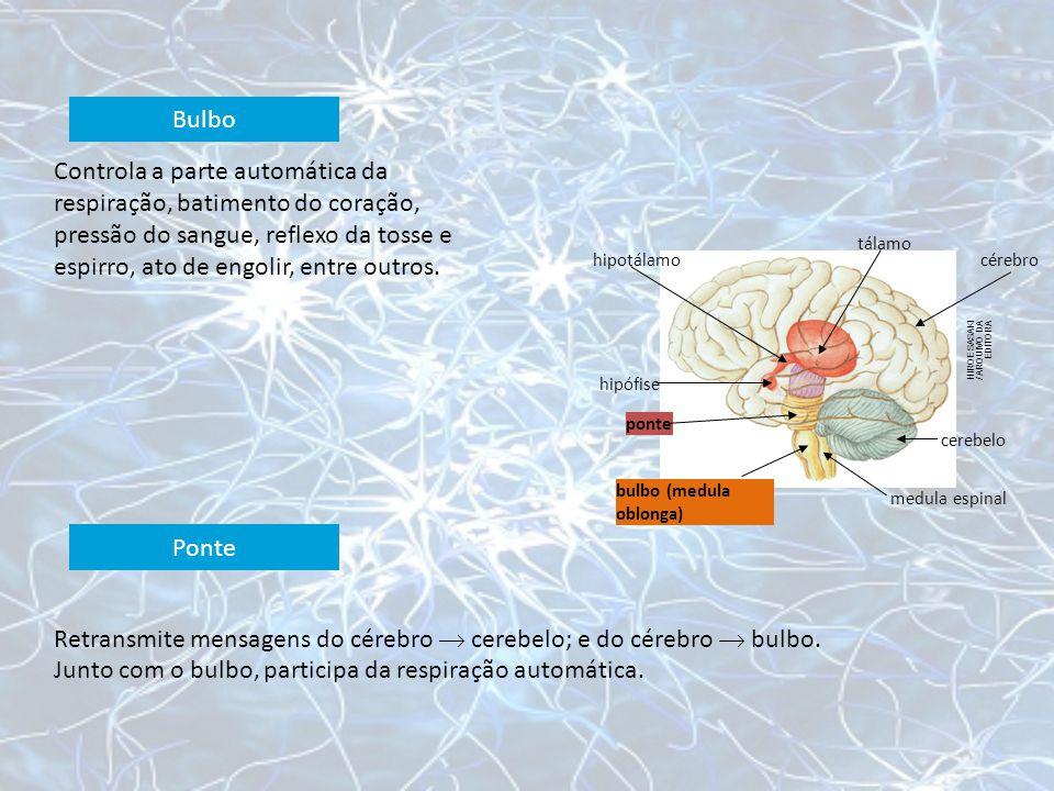 HIROE SASAKI / ARQUIVO DA EDITORA hipotálamo tálamo cérebro cerebelo medula espinal bulbo (medula oblonga) ponte hipófise Controla a parte automática