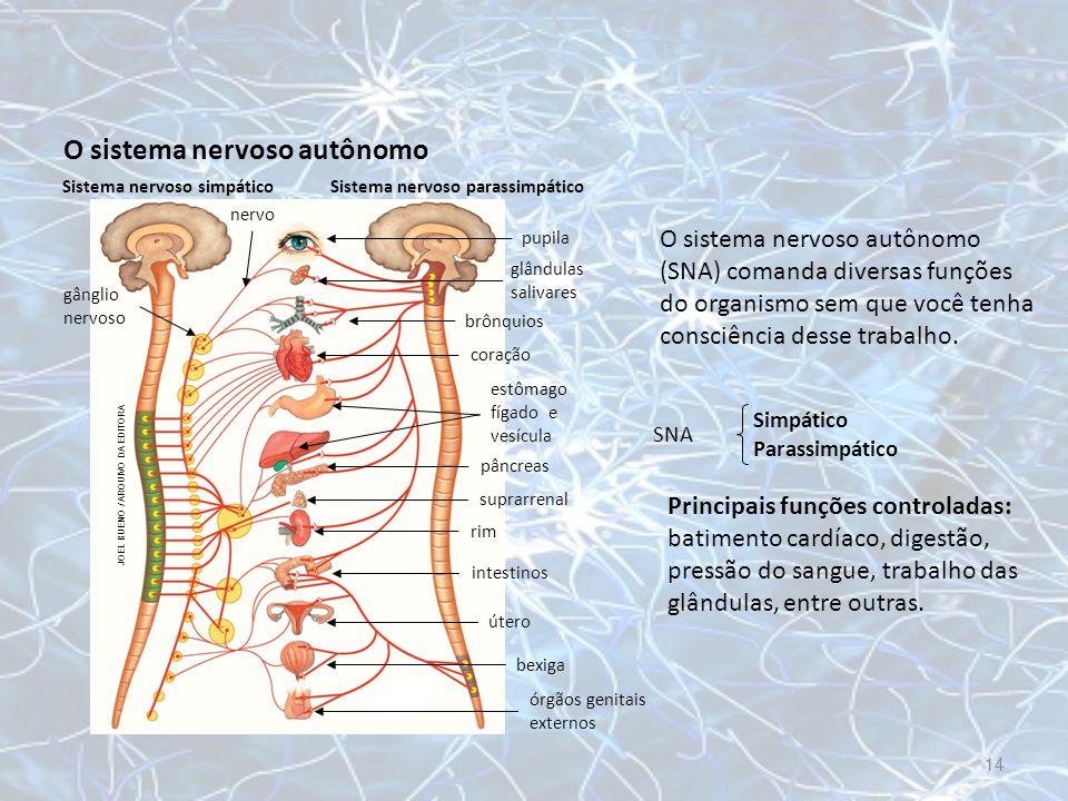 O sistema nervoso autônomo O sistema nervoso autônomo (SNA) comanda diversas funções do organismo sem que você tenha consciência desse trabalho. SNA S