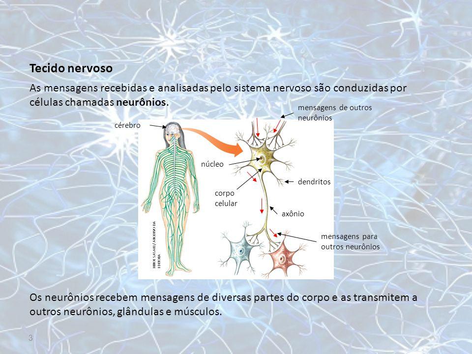 Tecido nervoso As mensagens recebidas e analisadas pelo sistema nervoso são conduzidas por células chamadas neurônios. Os neurônios recebem mensagens