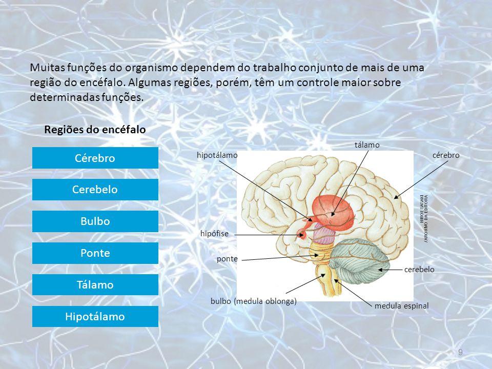 Cérebro HIROE SASAKI / ARQUIVO DA EDITORA hipotálamo tálamo cérebro cerebelo medula espinal bulbo (medula oblonga) ponte hipófise Maior parte do encéfalo.