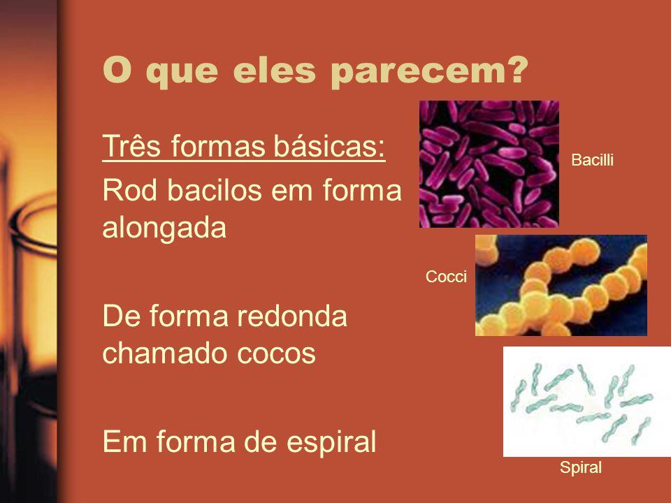 O que eles parecem? Três formas básicas: Rod bacilos em forma alongada De forma redonda chamado cocos Em forma de espiral Alguns existem como células