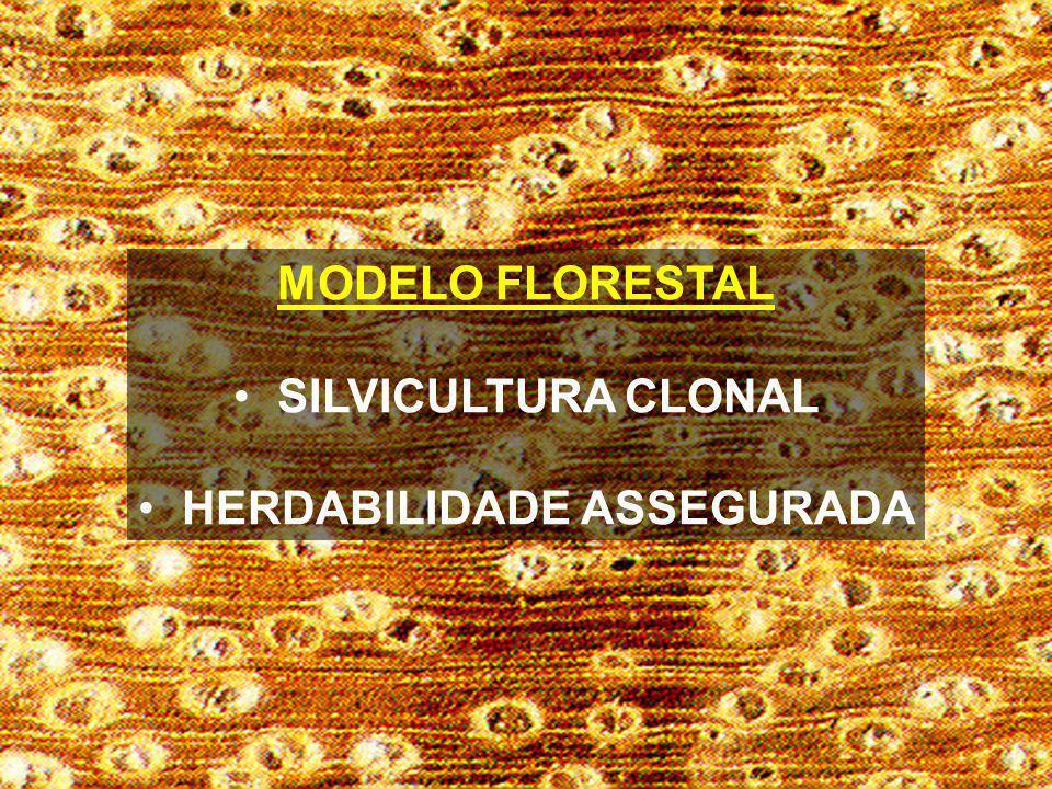 MODELO FLORESTAL SILVICULTURA CLONAL HERDABILIDADE ASSEGURADA