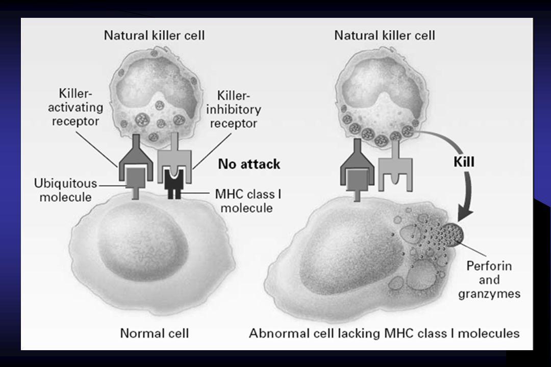TESTES LABORATORIAIS IL-2, IL-4, IL-6, IL-10, IL-2, IL-4, IL-6, IL-10, TNFalfa, IFNgama TNFalfa, IFNgama Cytometric Bead Array Cytometric Bead Array System - CBA System - CBA ( Citometria de fluxo) ( Citometria de fluxo)