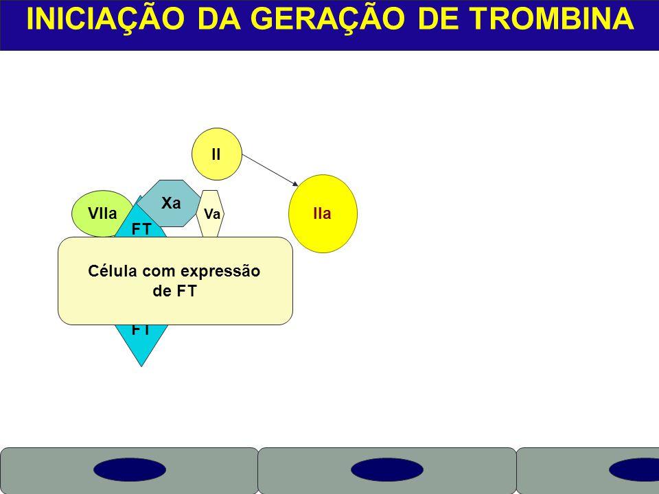 X VIIa INICIAÇÃO DA GERAÇÃO DE TROMBINA FT Célula com expressão de FT Xa Va II IIa