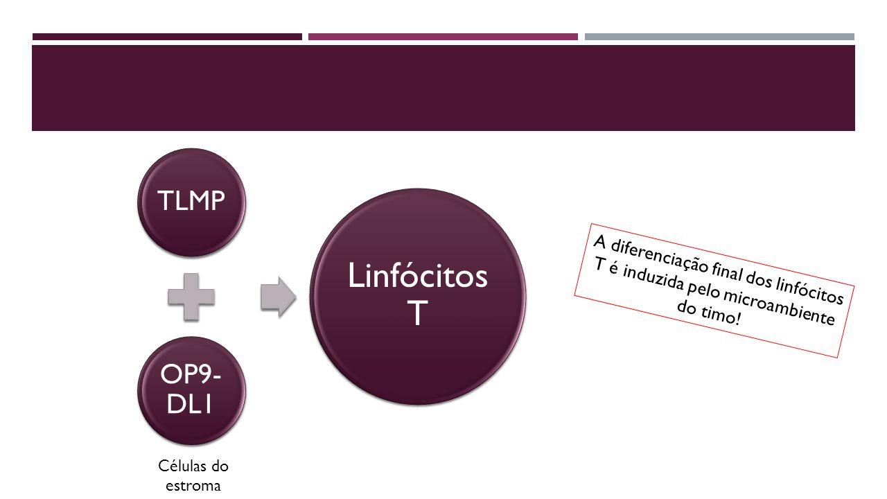 A diferenciação final dos linfócitos T é induzida pelo microambiente do timo.