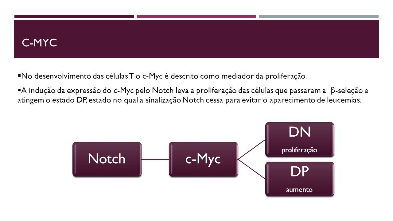  No desenvolvimento das células T o c-Myc é descrito como mediador da proliferação.