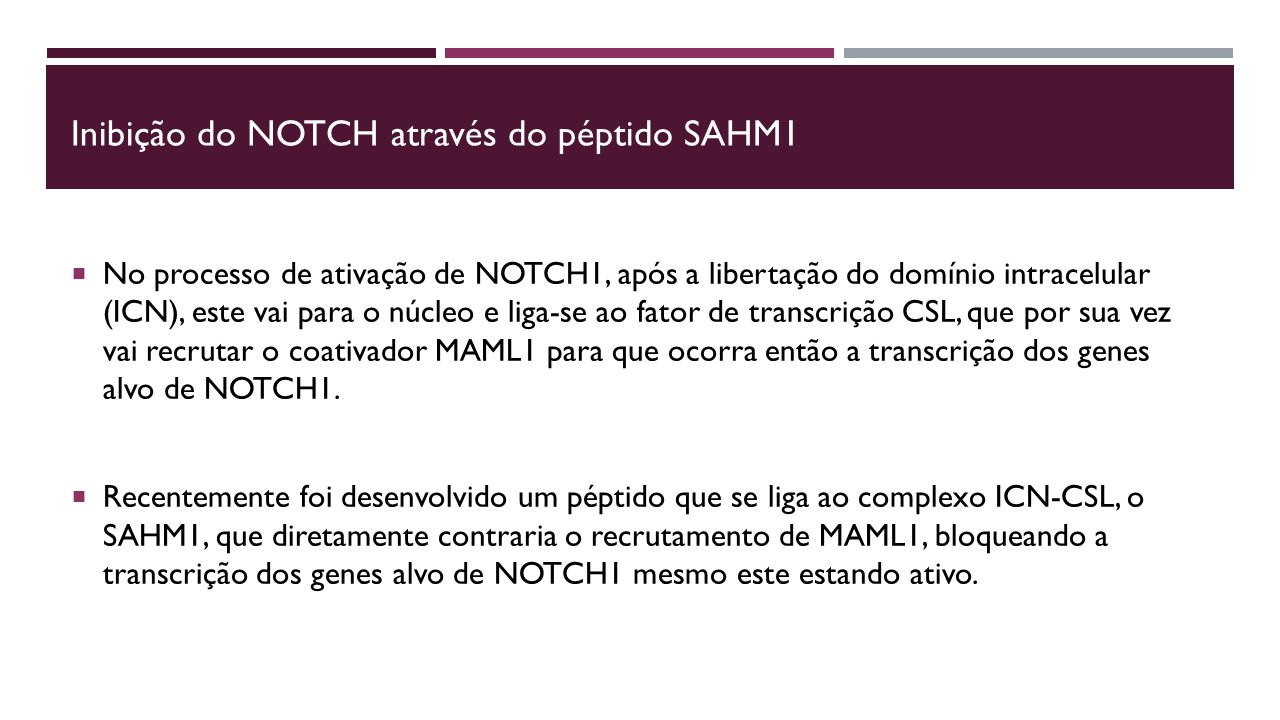 Inibição do NOTCH através do péptido SAHM1  No processo de ativação de NOTCH1, após a libertação do domínio intracelular (ICN), este vai para o núcleo e liga-se ao fator de transcrição CSL, que por sua vez vai recrutar o coativador MAML1 para que ocorra então a transcrição dos genes alvo de NOTCH1.