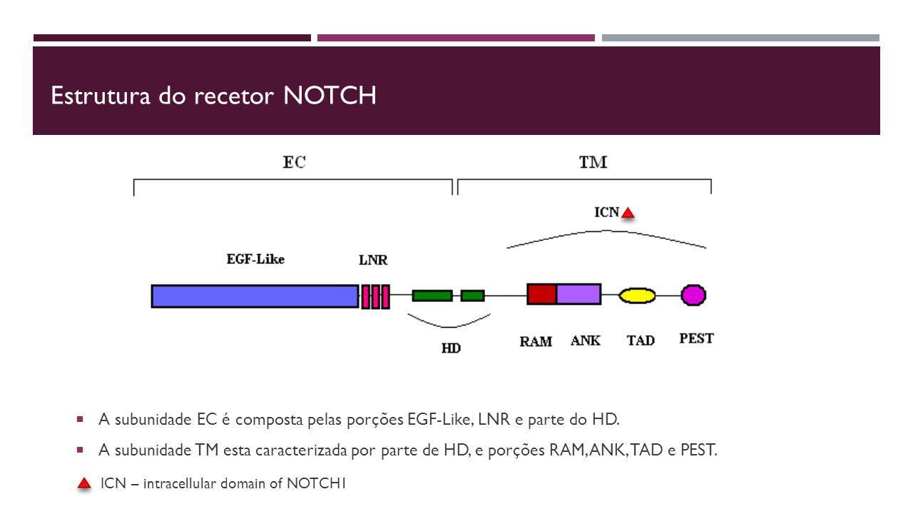 Estrutura do recetor NOTCH  A subunidade EC é composta pelas porções EGF-Like, LNR e parte do HD.