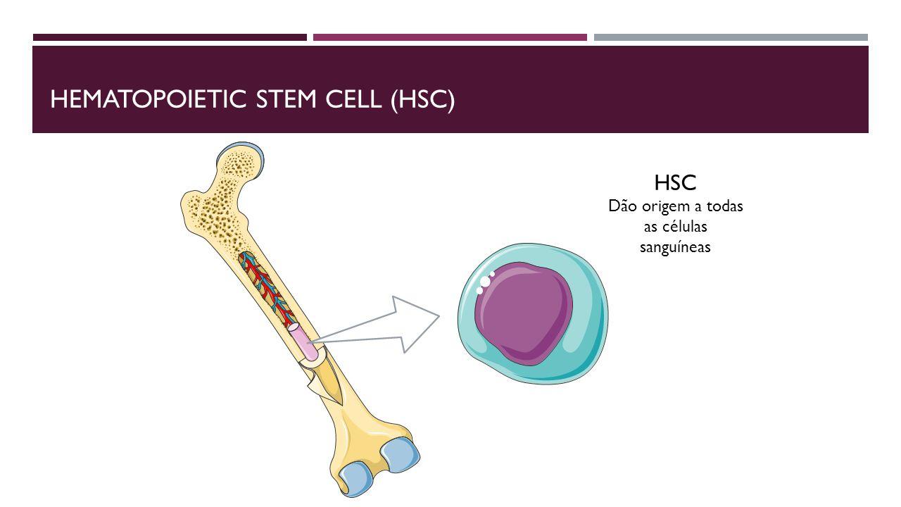 AUTO-RENOVAÇÃO DAS STEM CELLS Notch Gene ld E-proteínas Proteínas de diferenciação Prolonga a expessão do GATA-2 Linhagem mieloide Hes1 E2A EBF e PAX5 Linfócitos B