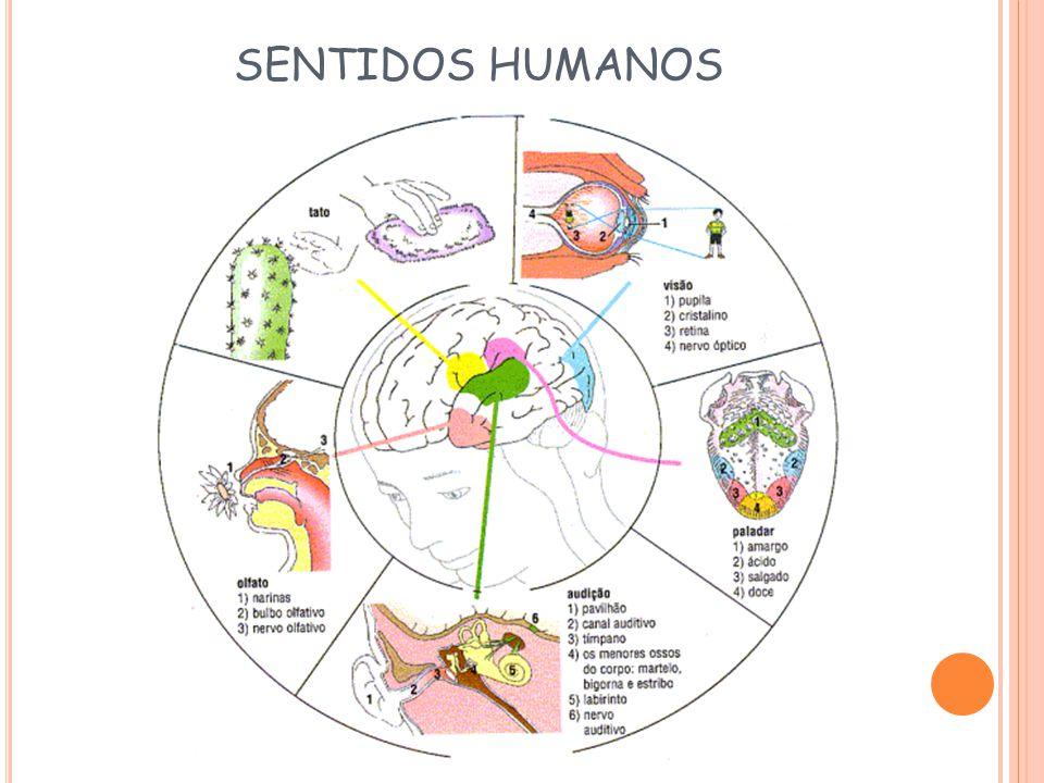 SENTIDOS HUMANOS