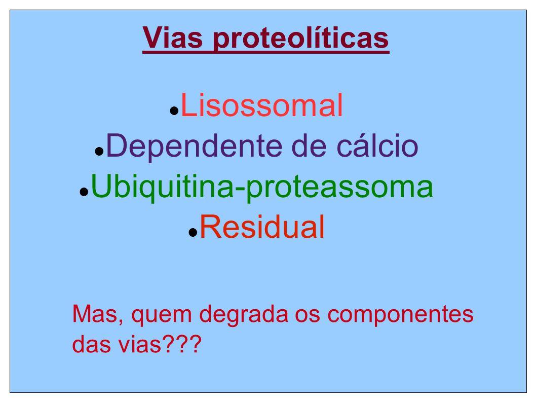 Vias proteolíticas Lisossomal Dependente de cálcio Ubiquitina-proteassoma Residual Mas, quem degrada os componentes das vias???