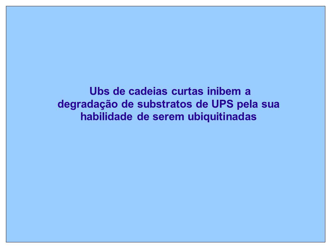 Ubs de cadeias curtas inibem a degradação de substratos de UPS pela sua habilidade de serem ubiquitinadas