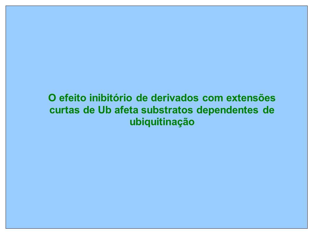O efeito inibitório de derivados com extensões curtas de Ub afeta substratos dependentes de ubiquitinação