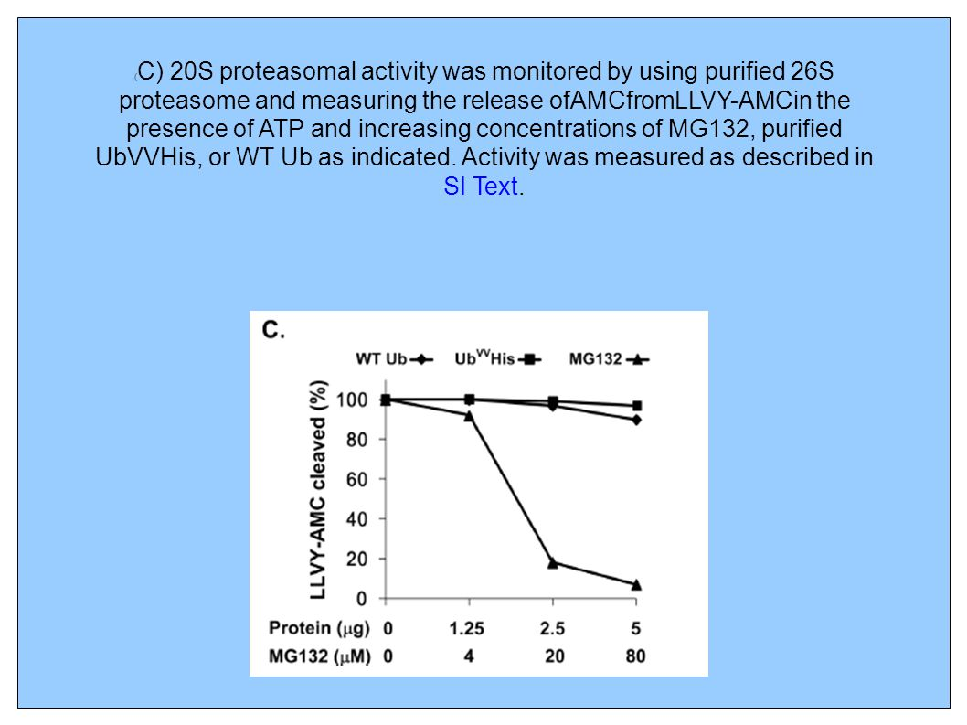 ( C) 20S proteasomal activity was monitored by using purified 26S proteasome and measuring the release ofAMCfromLLVY-AMCin the presence of ATP and inc