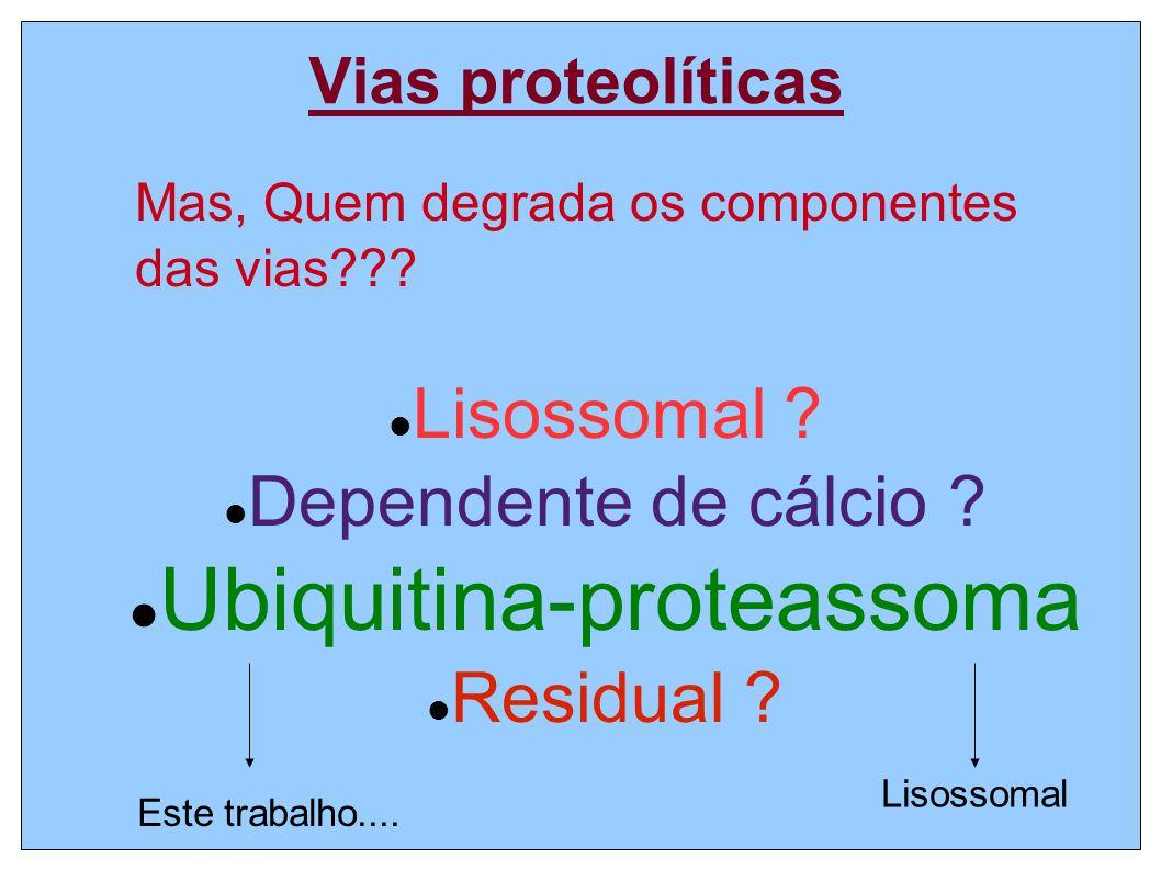 Vias proteolíticas Lisossomal ? Dependente de cálcio ? Ubiquitina-proteassoma Residual ? Mas, Quem degrada os componentes das vias??? Lisossomal Este