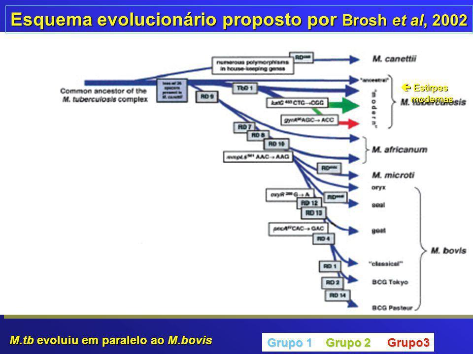 Esquema evolucionário proposto por Brosh et al, 2002 Grupo 1 Grupo 2 Grupo3  Estirpes modernas modernas M.tb evoluiu em paralelo ao M.bovis