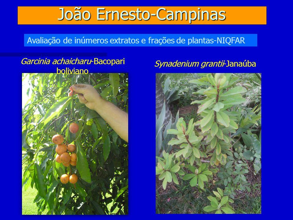João Ernesto-Campinas Avaliação de inúmeros extratos e frações de plantas-NIQFAR Garcinia achaicharu-Bacopari boliviano Synadenium grantii-Janaúba
