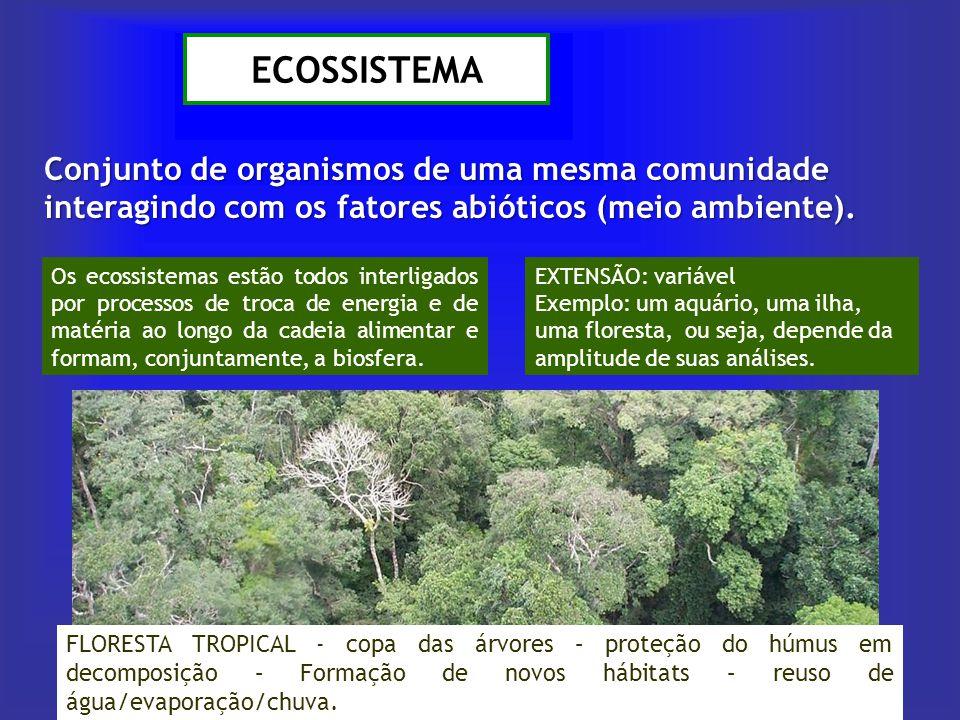 ECOSSISTEMA Conjunto de organismos de uma mesma comunidade interagindo com os fatores abióticos (meio ambiente). FLORESTA TROPICAL - copa das árvores