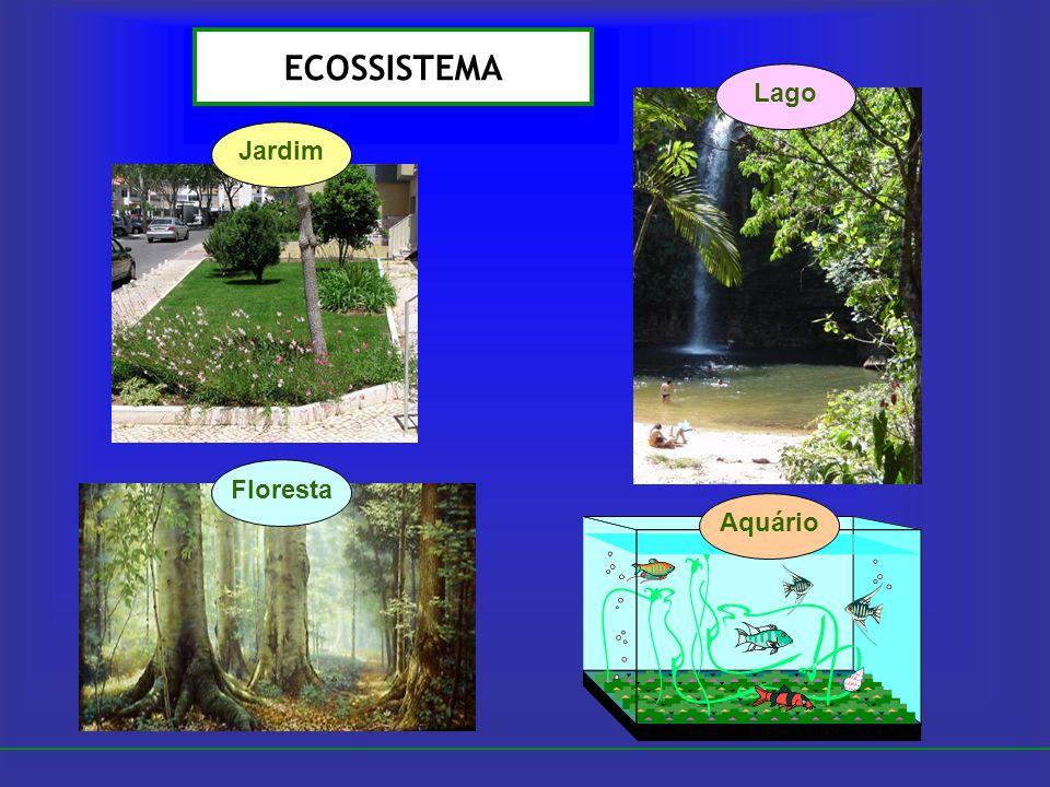 ECOSSISTEMA Jardim Floresta Lago Aquário