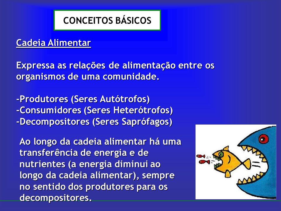 CONCEITOS BÁSICOS Cadeia Alimentar Expressa as relações de alimentação entre os organismos de uma comunidade. -Produtores (Seres Autótrofos) -Consumid