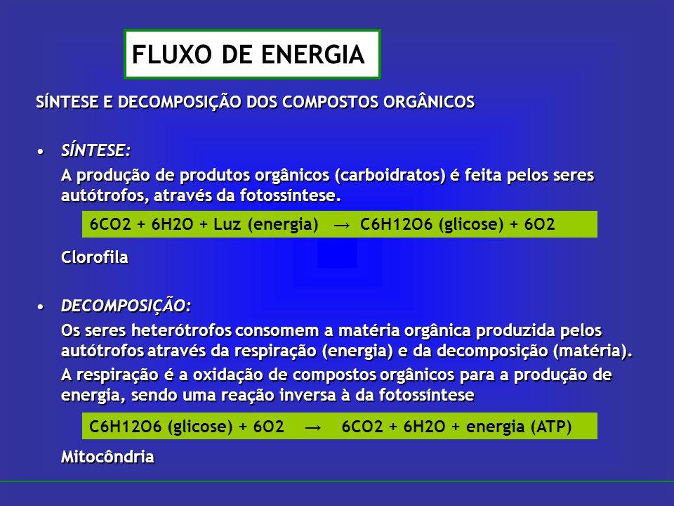 SÍNTESE E DECOMPOSIÇÃO DOS COMPOSTOS ORGÂNICOS SÍNTESE:SÍNTESE: A produção de produtos orgânicos (carboidratos) é feita pelos seres autótrofos, atravé