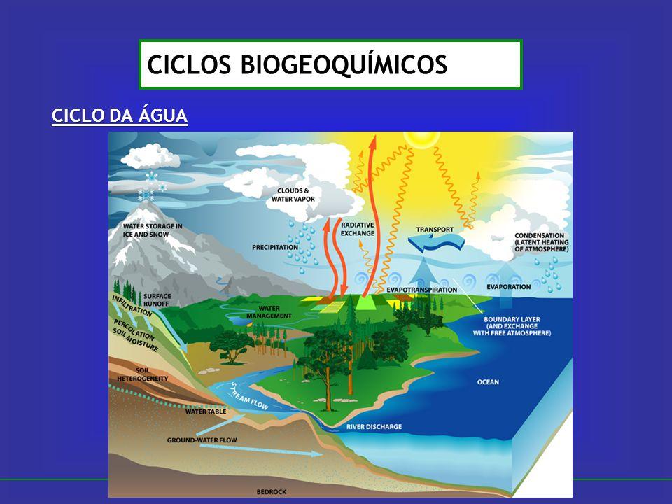 CICLO DA ÁGUA CICLOS BIOGEOQUÍMICOS