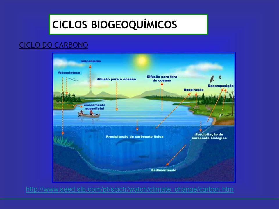 CICLO DO CARBONO CICLOS BIOGEOQUÍMICOS http://www.seed.slb.com/pt/scictr/watch/climate_change/carbon.htm