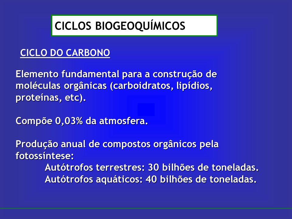 CICLO DO CARBONO CICLOS BIOGEOQUÍMICOS Elemento fundamental para a construção de moléculas orgânicas (carboidratos, lipídios, proteínas, etc). Compõe