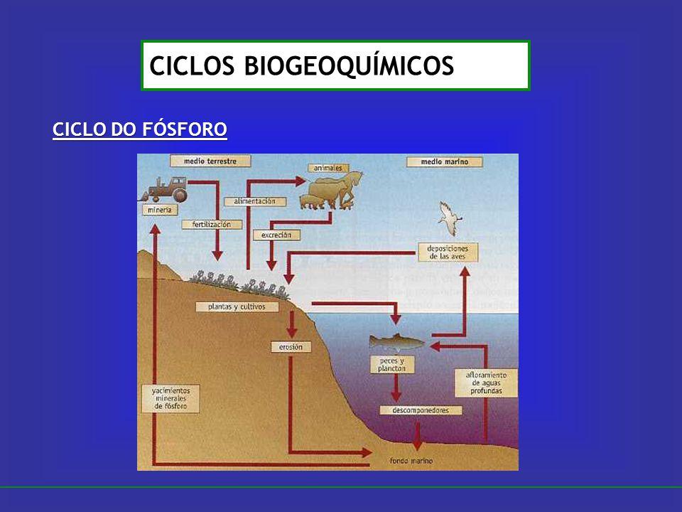 CICLO DO FÓSFORO CICLOS BIOGEOQUÍMICOS