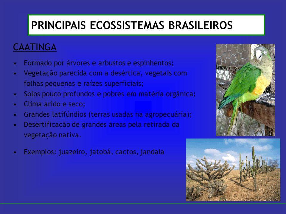 CAATINGA Formado por árvores e arbustos e espinhentos; Vegetação parecida com a desértica, vegetais com folhas pequenas e raízes superficiais; Solos p