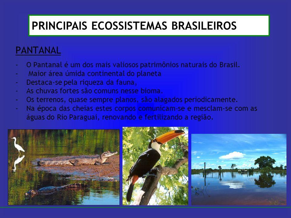 PANTANAL -O Pantanal é um dos mais valiosos patrimônios naturais do Brasil. - Maior área úmida continental do planeta -Destaca-se pela riqueza da faun