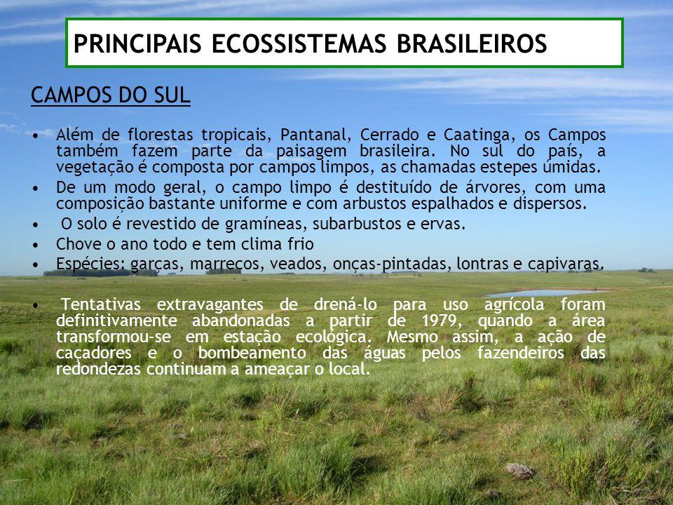 CAMPOS DO SUL Além de florestas tropicais, Pantanal, Cerrado e Caatinga, os Campos também fazem parte da paisagem brasileira. No sul do país, a vegeta