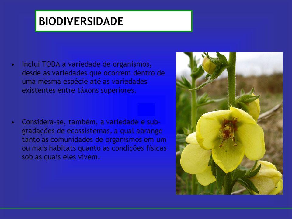 Inclui TODA a variedade de organismos, desde as variedades que ocorrem dentro de uma mesma espécie até as variedades existentes entre táxons superiore