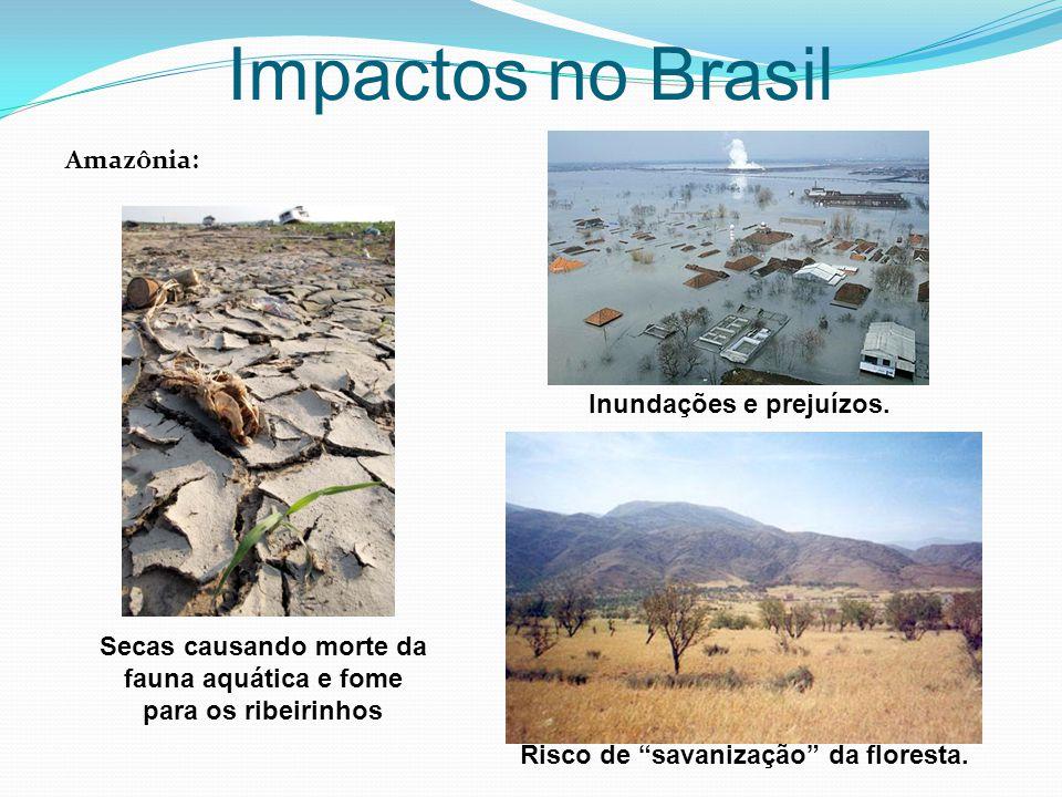 """Impactos no Brasil Amazônia: Secas causando morte da fauna aquática e fome para os ribeirinhos Inundações e prejuízos. Risco de """"savanização"""" da flore"""