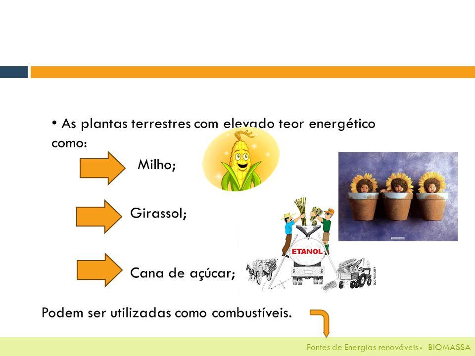 Fontes de Energias renováveis - BIOMASSA As plantas terrestres com elevado teor energético como: Milho; Girassol; Cana de açúcar; Podem ser utilizadas como combustíveis.