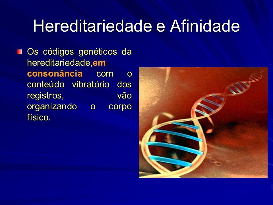 Hereditariedade e Afinidade Os códigos genéticos da hereditariedade,em consonância com o conteúdo vibratório dos registros, vão organizando o corpo fí