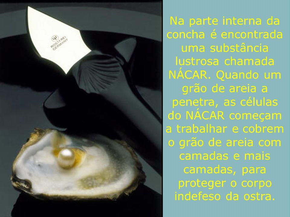 """""""Uma ostra que não foi ferida não produz pérolas"""