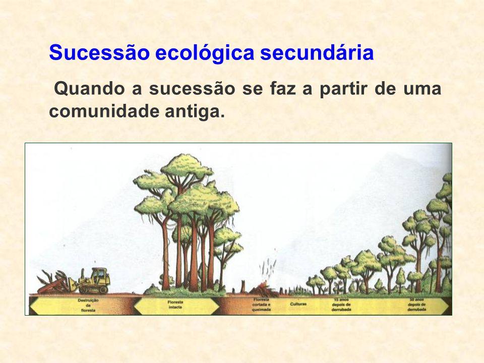 Sucessão ecológica secundária Quando a sucessão se faz a partir de uma comunidade antiga.