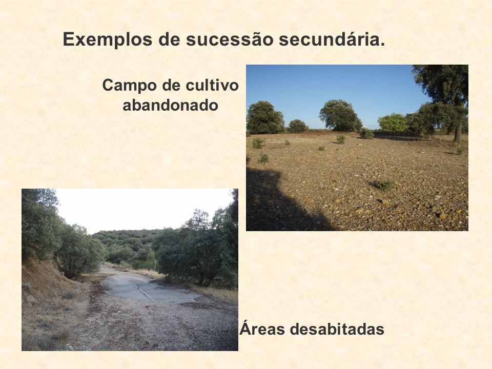 Exemplos de sucessão secundária. Campo de cultivo abandonado Áreas desabitadas