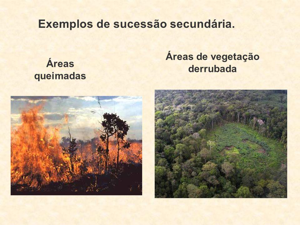 Exemplos de sucessão secundária. Áreas de vegetação derrubada Áreas queimadas