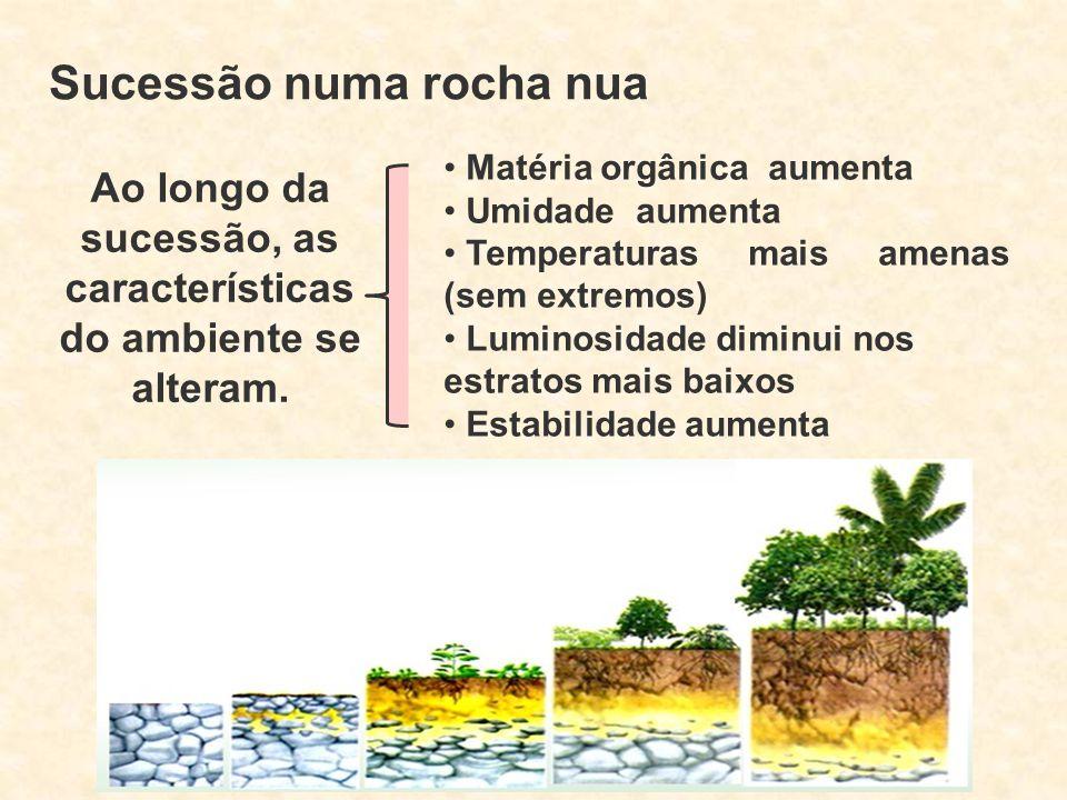 Sucessão numa rocha nua Ao longo da sucessão, as características do ambiente se alteram. Matéria orgânica aumenta Umidade aumenta Temperaturas mais am