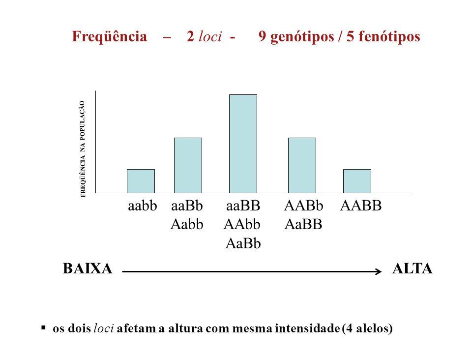 ALTA aabb aaBb aaBB AABb AABB Aabb AAbb AaBB AaBb FREQÜÊNCIA NA POPULAÇÃO BAIXA Freqüência – 2 loci - 9 genótipos / 5 fenótipos  os dois loci afetam