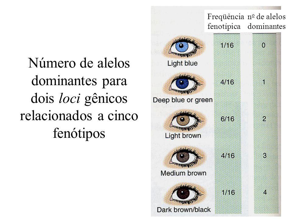 Número de alelos dominantes para dois loci gênicos relacionados a cinco fenótipos Freqüência fenotípica n o de alelos dominantes