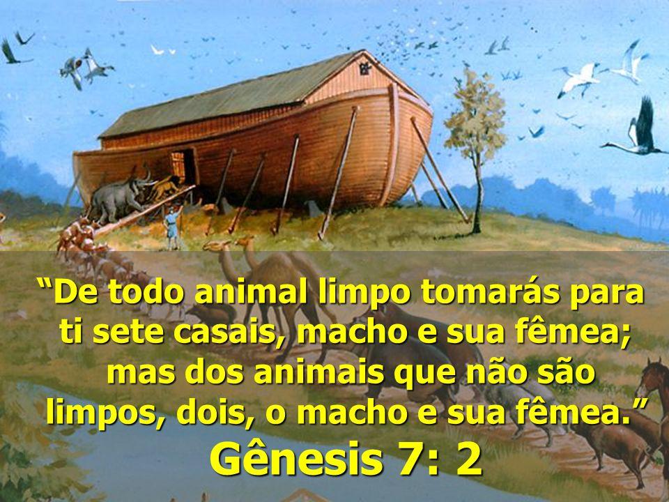 """""""De todo animal limpo tomarás para ti sete casais, macho e sua fêmea; mas dos animais que não são mas dos animais que não são limpos, dois, o macho e"""