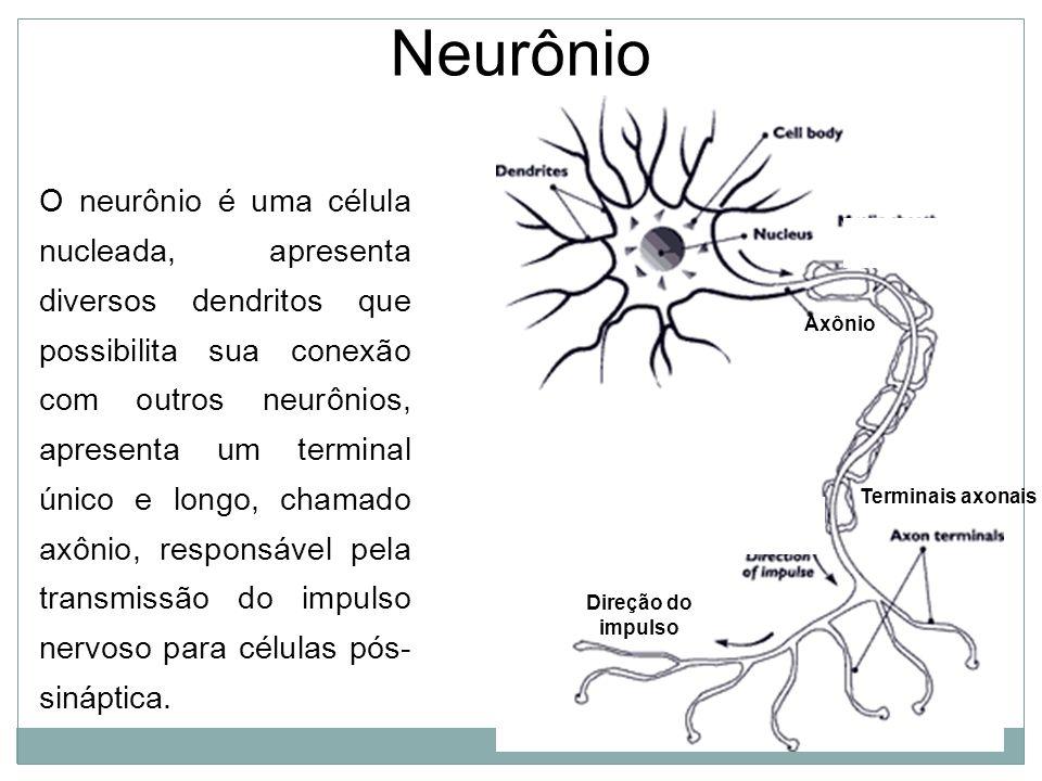 Neurônio Axônio Terminais axonais Direção do impulso O neurônio é uma célula nucleada, apresenta diversos dendritos que possibilita sua conexão com outros neurônios, apresenta um terminal único e longo, chamado axônio, responsável pela transmissão do impulso nervoso para células pós- sináptica.