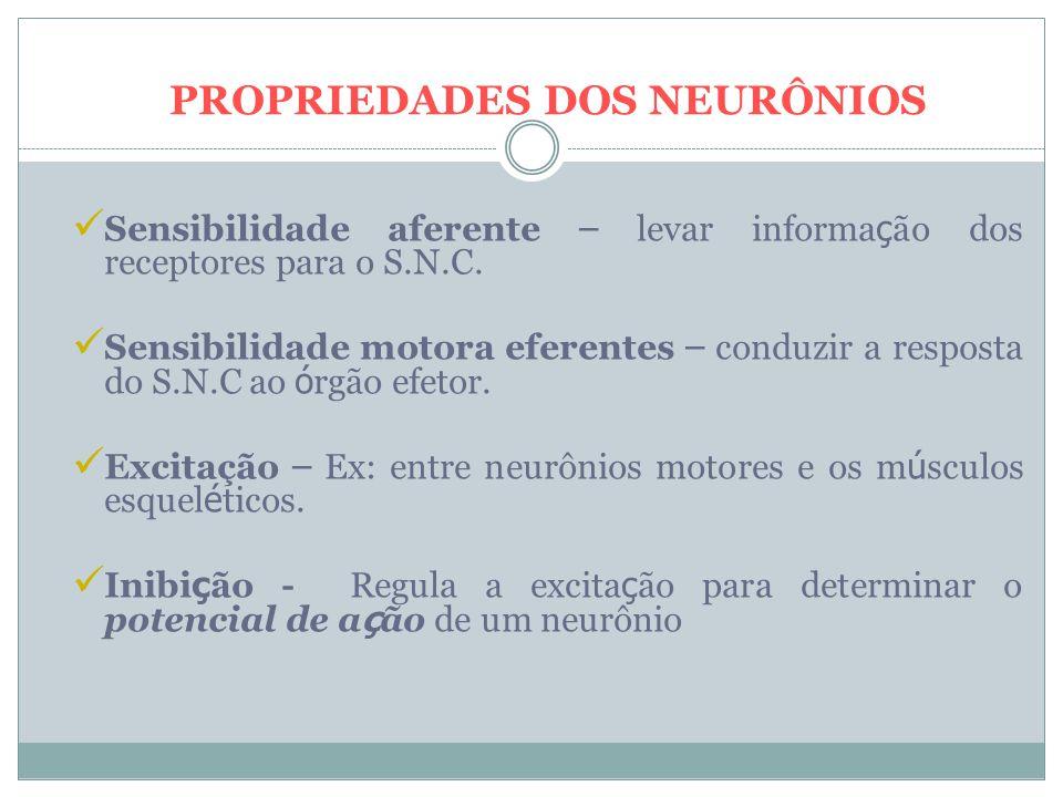 PROPRIEDADES DOS NEURÔNIOS Sensibilidade aferente – levar informa ç ão dos receptores para o S.N.C.