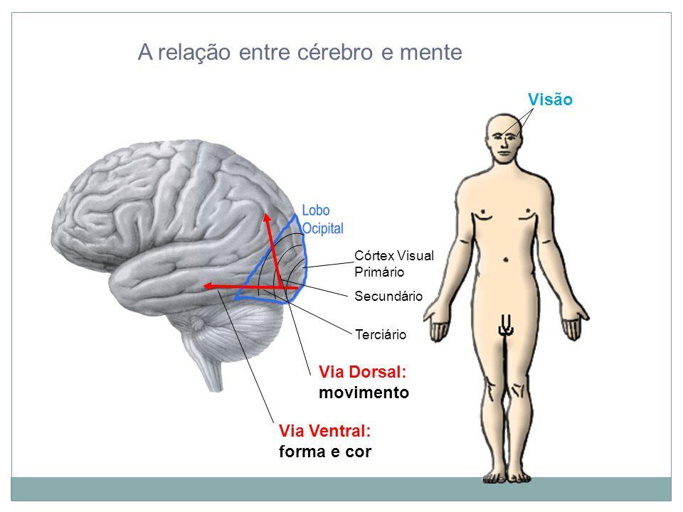 A relação entre cérebro e mente Visão Terciário Córtex Visual Primário Secundário Via Ventral: forma e cor Via Dorsal: movimento