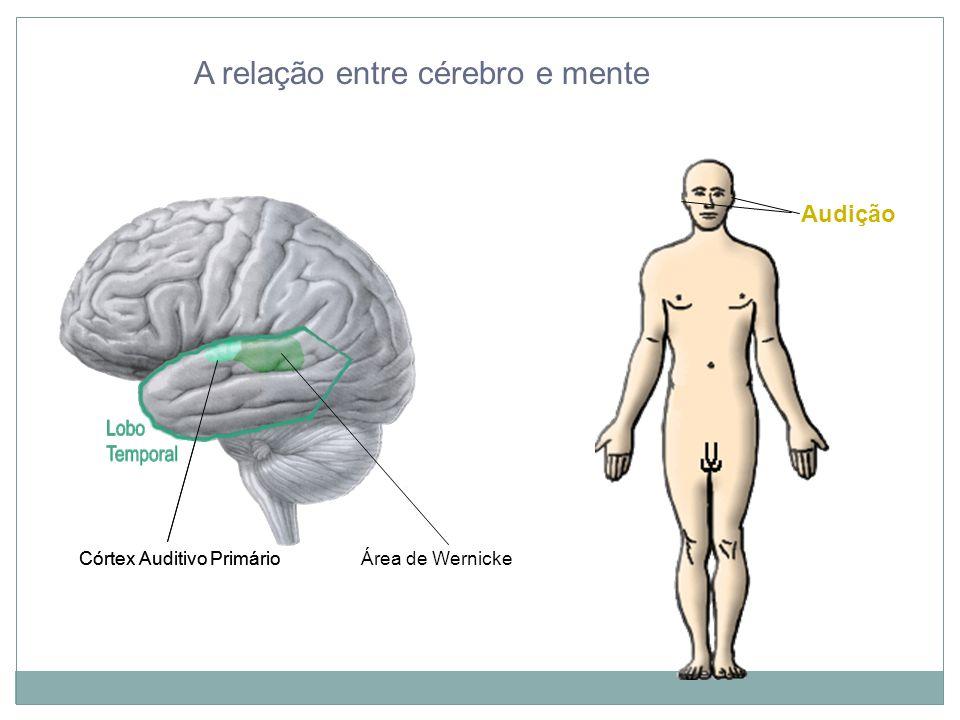 A relação entre cérebro e mente Audição Córtex Auditivo Primário Córtex Auditivo Primário Área de Wernicke